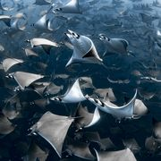 blancpain ocean awards