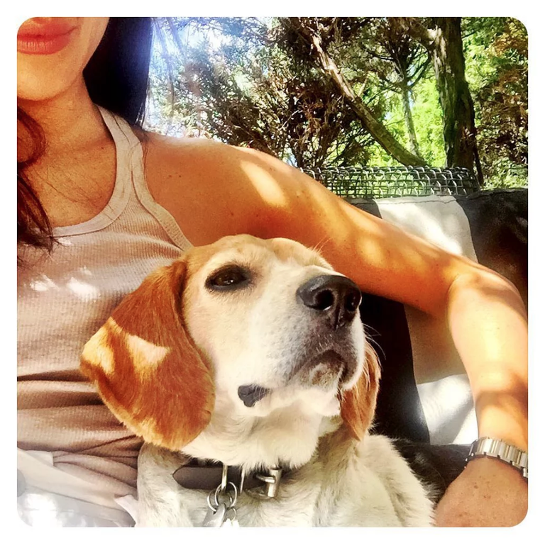Markle with her dog Guy on an Instagram she posted before deleting her account.