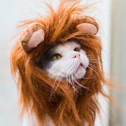 cat wearing lion costume