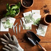 food52 best online vegetable seeds companies   elle decor
