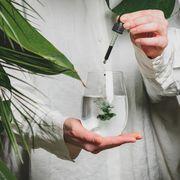 chlorophyll health benefits  how to drink liquid chlorophyll