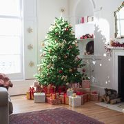 amazon christmas tree delivery