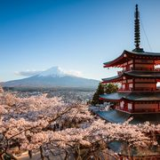 Chureito pagoda and Mt Fuji with cherry blossom