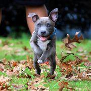 cute photos of pit bulls