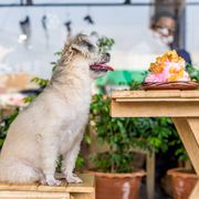 eat a meal with your pup no matter where you are with this state by state list of dog friendly restaurants