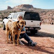 Dog, Canidae, Mode of transport, Transport, Adventure, Wildlife, Vehicle, Geological phenomenon, Dirt road, Safari,