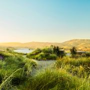 sustainable landscape
