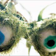eyeball fern