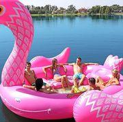 Water transportation, Swan boat, Pink, Inflatable, Flamingo, Swan, Boat, Vehicle, Water bird, Bird,