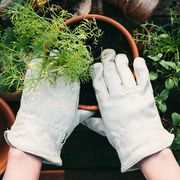 hands in gardening gloves potting plant