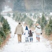 a family of four are outdoors at a tree farm they are walking arm in arm in search of a christmas tree