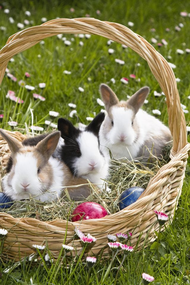 easter ideas, woman's day