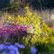 fall flowers garden   elle decor
