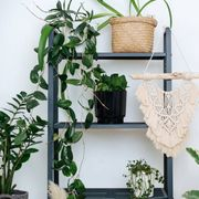 the corner of the room is filled with many different domestic plants, a shelf with pots, a macrame and a lamp