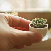 tiny plant trend