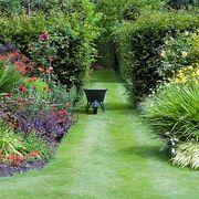 garden with wheelbarrow