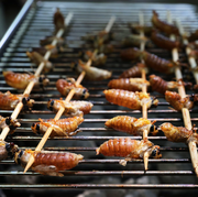 cicadas being fried on grill