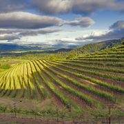 best napa wineries - where to go in napa valley