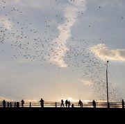 Sky, Flock, Cloud, Bird, Bird migration, Water, Animal migration, Morning, Evening, Starling,