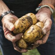 Midsection of man holding dirty potatoes in garden
