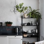 best-plant-for-every-room