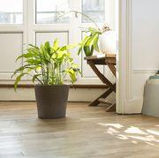 Floor, Flooring, Tile, Room, Houseplant, Laminate flooring, Interior design, Wood flooring, Furniture, Hardwood,