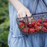 Girl holding basket of freshly picked strawberries