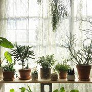 Flowerpot, Houseplant, Plant, Flower, Herb, Botany, Interior design, Room, Window,