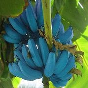Flowering plant, Flower, Plant, Blue, Banana family, Banana, Leaf, Tree, Petal, Saba banana,