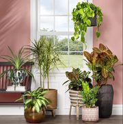 houseplants in planters