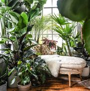 chaise surrounded by plants