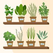 illustration of vegetable and herb plants on a shelf