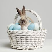 how-to-track-the-easter-bunny