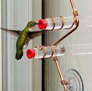 hummingbird at copper feeder against window