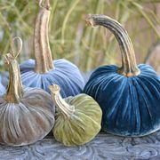 Pumpkin, Winter squash, Calabaza, Vegetable, Cucurbita, Gourd, Plant, Food, Still life, Local food,