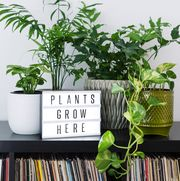 plants grow here sign with house plants on shelf