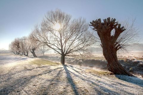 Winter, Tree, Snow, Natural landscape, Nature, Sky, Freezing, Atmospheric phenomenon, Frost, Morning,