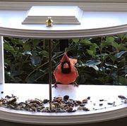 krick view window tray bird feeder
