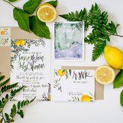 Persian lime, Product, Lemon-lime, Citrus, Lemon, Plant, Sweet lemon, Lemon basil, Herbal, Meyer lemon,