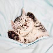 Lovely kitten on sleeping