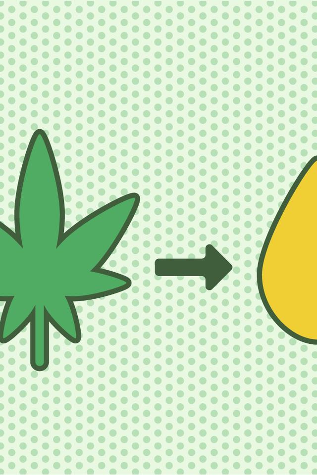 Green, Leaf, Plant,
