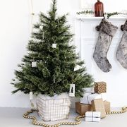 Christmas tree, Tree, oregon pine, Christmas decoration, Colorado spruce, Evergreen, Branch, Spruce, Fir, Christmas,