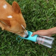 water bottle dispenser with blue dispenser that a dog is drinking out of