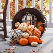 plaid painted pumpkins for halloween