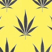 Leaf, Yellow, Plant, Pattern, Hemp family, Weed, Hemp, Symmetry, Flowering plant, Flower,