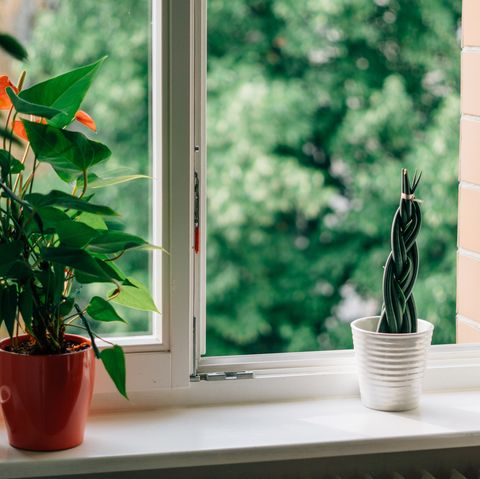 potted plants on windowsill with open window