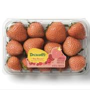 driscolls rose strawberries