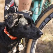 rosie the trail dog   bike with dogs