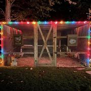 Night, Light, Lighting, Tree, Sky, Christmas lights, House, Home, Neon, Architecture,