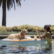 dog pool yacht float